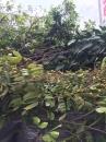 各類水果樹