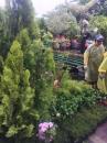 各種類綠化樹