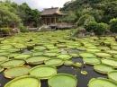 台北市景點、中正紀念堂、雙溪公園、總統府_180106_0019