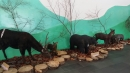 嘉義景點,塔塔加,檜意生活村,好美里彩繪_180106_0014