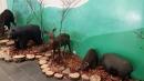 嘉義景點,塔塔加,檜意生活村,好美里彩繪_180106_0016