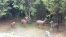 嘉義景點,塔塔加,檜意生活村,好美里彩繪_180106_0017