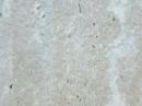 Winton帝寶系列V 塑膠地磚 塑膠地板  2062