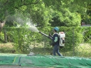 樹叢間消毒防疫