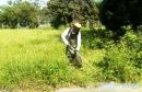 花木修整除草