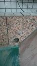 圍牆鑽孔排水孔鑽孔,台中排水孔鑽孔,台中鑽孔