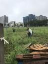 園藝除草3