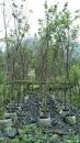 景觀樹木,庭園造景樹木,綠化樹木,園藝樹苗,道路用樹-25