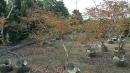 景觀樹木,庭園造景樹木,綠化樹木,園藝樹苗,道路用樹-41