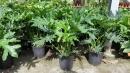 景觀樹木,庭園造景樹木,綠化樹木,園藝樹苗,道路用樹-64