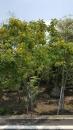 景觀樹木,庭園造景樹木,綠化樹木,園藝樹苗,道路用樹-92