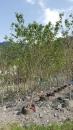 景觀樹木,庭園造景樹木,綠化樹木,園藝樹苗,道路用樹-104