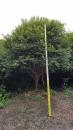 景觀樹木,庭園造景樹木,綠化樹木,園藝樹苗,道路用樹-116