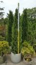 景觀樹木,庭園造景樹木,綠化樹木,園藝樹苗,道路用樹-123