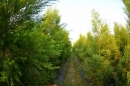 上庄休閒農場-茶樹
