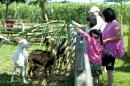 中原世紀休閒農場22
