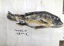 張萬傳,魚,設色水墨畫作品
