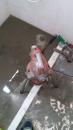 排水管路通管