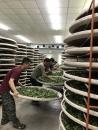 上水茶業 製茶廠