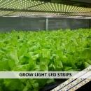 GROW LIGHT LED STRIPS