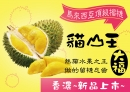 頂級貓山王榴槤大福