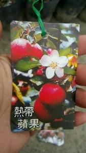 熱帶紅蘋果