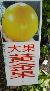 大果黃金果