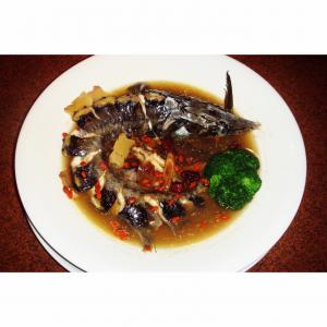 野生高山鱘龍魚