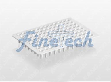 PCR反應板FT333-2