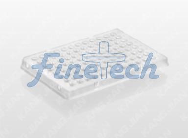 PCR反應板FT331