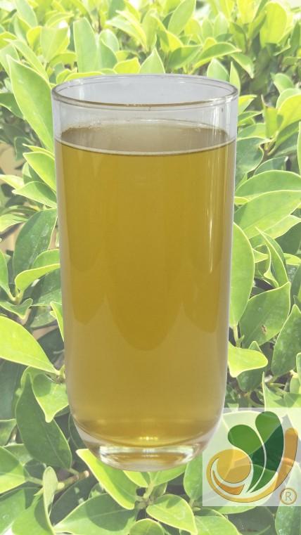 (50x)玄米玉露茶