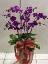 蘭花盆栽04