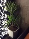 室內盆栽09