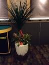 室內盆栽12