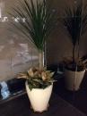 室內盆栽16