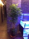 室內盆栽17