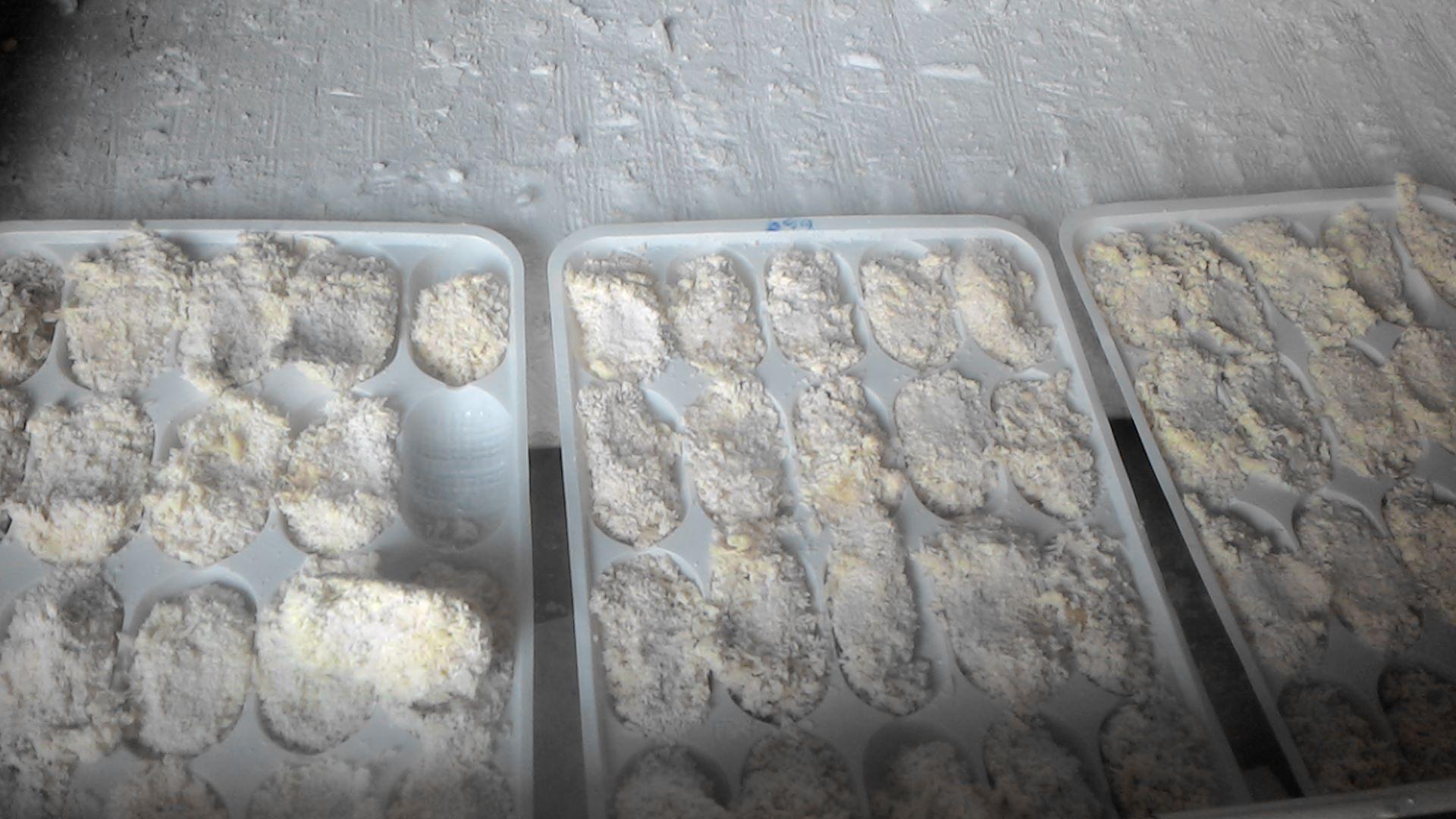 牡蠣-冷凍後2.jpg