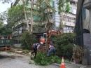慈濟醫院移樹工程 (3)