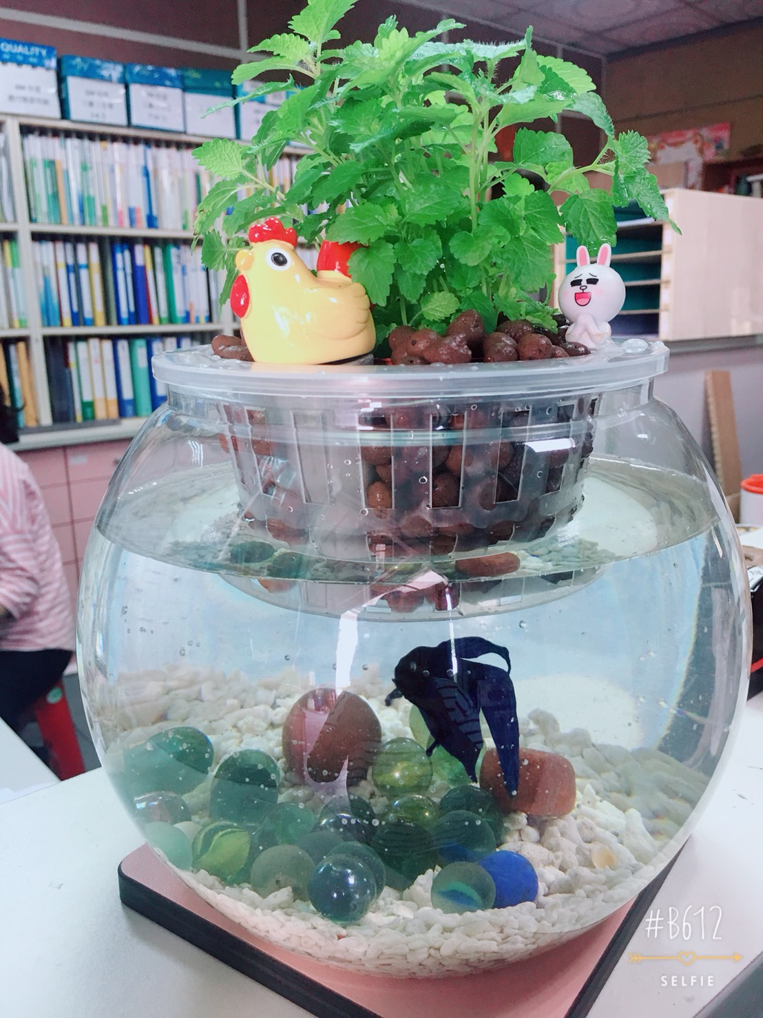 魚兒水中游生態缸