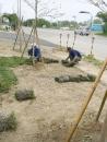人力派遣--種植草皮