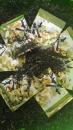 茉莉綠茶茶包 (2)