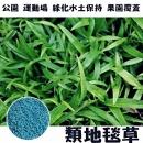 【類地毯草】一公斤裝