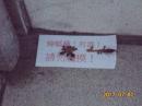 消滅蟑螂-凝膠餌劑誘食施作