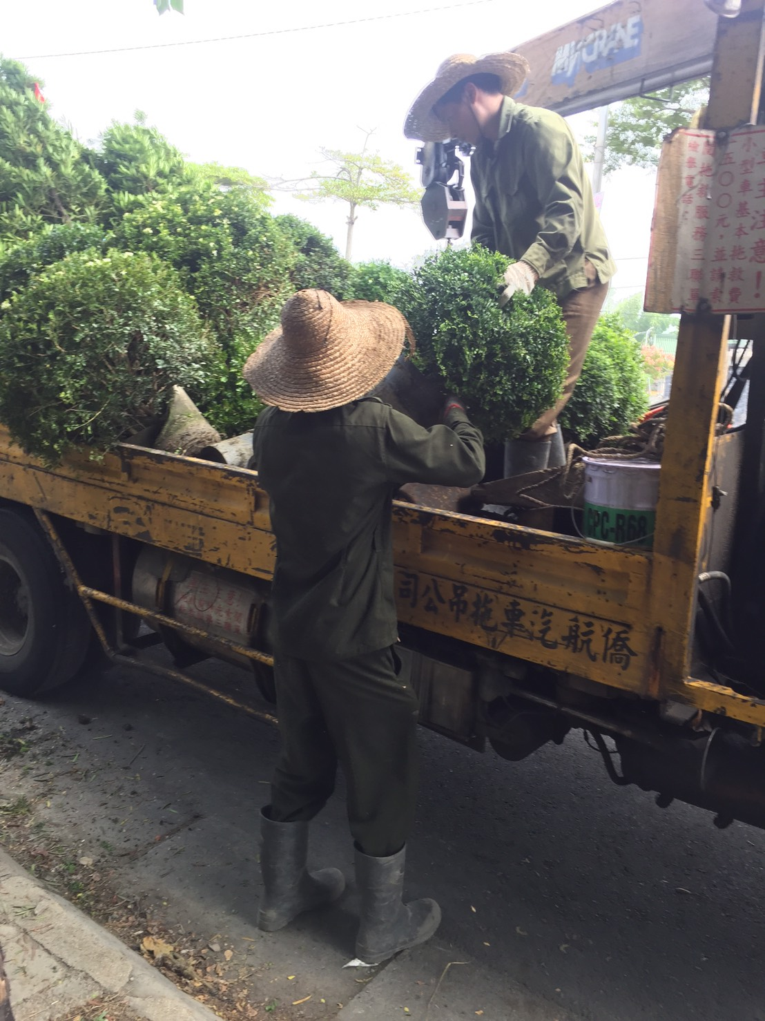 綠化樹木 批發
