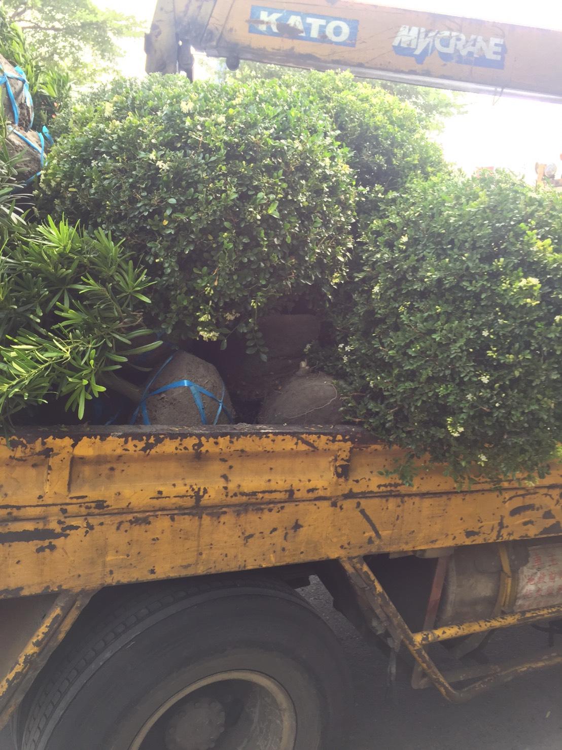 綠化樹木批發