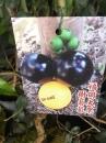 福岡大果樹葡萄