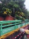 各種綠化樹木:層型真柏