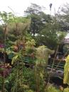 各種類綠化樹木:五葉松