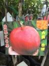 蘋果文芒水果樹