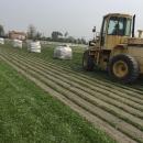 巴西地毯草 批發